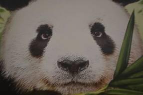 Zooloretto - der Panda